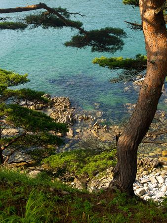 sea and pines         photo