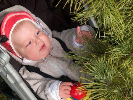 boy touching pine branch photo