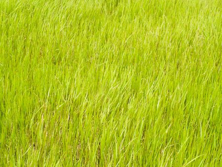 futball: abstract grass texture digitally generated