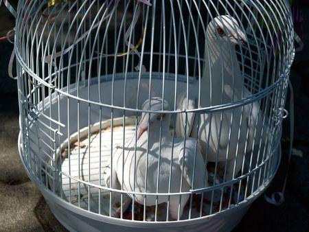 fiance: wedding doves in birdcage