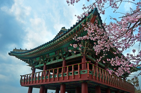 historical landmark: buddhist temple at Jeju Korea with sakura cherry blossoms