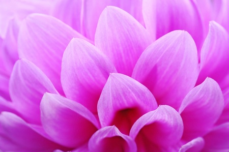Closeup of pink flower with soft focus floral background Stock Photo - 9380268