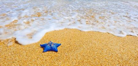 sandy: Estrella de mar azul en la playa de arena contra la ola