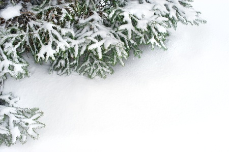wonderland: snow fir tree branches under snowfall. framework for text