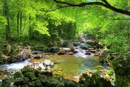 cascades: flusso di foresta caduta Smolny nella riserva primorye russo  Archivio Fotografico