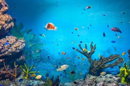 hard coral: torpical fishes at Seoul Coex Oceanarium