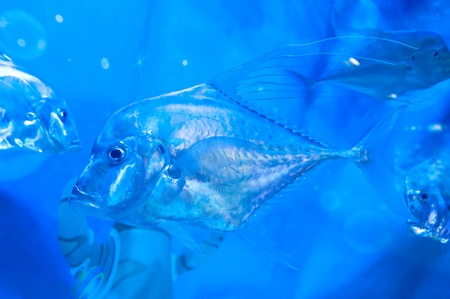 oceanarium: torpical fishes at Seoul Coex Oceanarium