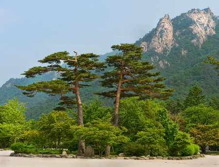 famous pair pines - symbol of Seoraksan National Park, South korea  Stock Photo