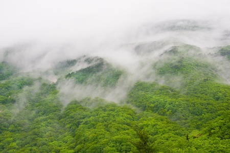 foggy forest view of Seorak-san National Park, South korea