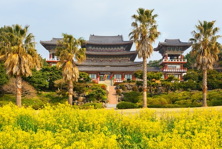 Rape flowers at famous Yakcheonsa Buddhist Temple, Jeju Island, South Korea