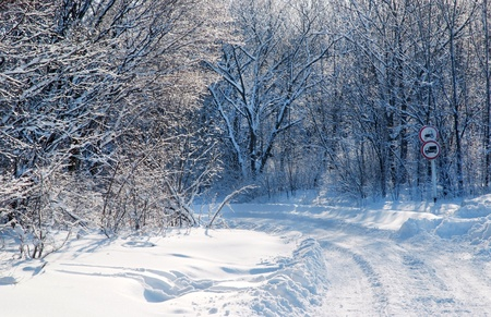 snowy winter in the woods Stock Photo - 13261963