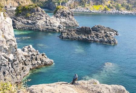 cascade range: Jungmun Daepo Haean Jusangjeollidae at Jeju Island - The largest pillar rock formation in Korea