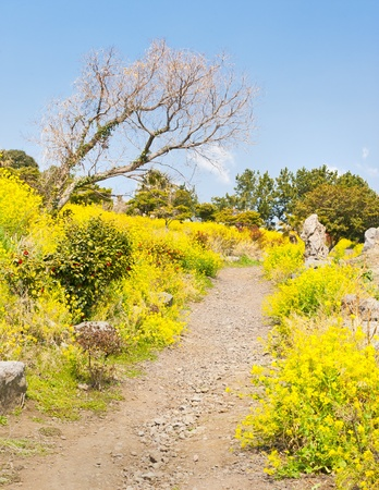 Springtime view with flowers blossom at Jeju island Korea Stock Photo