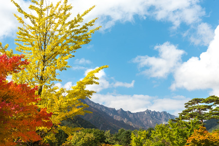 garden scenery: Seorak fall view in the morning light, Seoraksan National Park, South korea