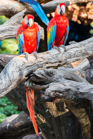 Colorful parrots in  Bangkok Thailand Stock Photo