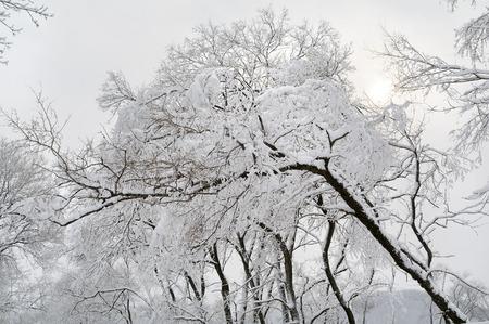 snowfall: snowfall in the town