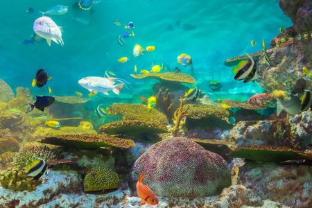 tropical fishes at Rayong aquarium, Thailand