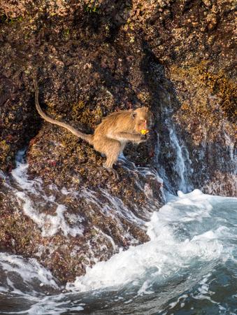 Monkey at the rocks of the Monkey island at Koh Chang, Thailand