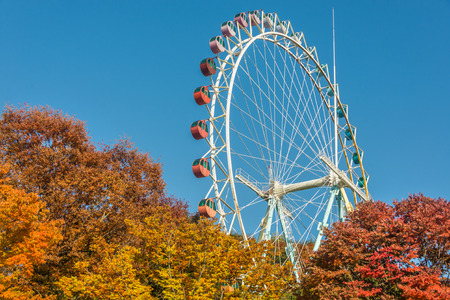 ferriswheel: Brightly colored Ferris wheel against the blue sky and fall trees