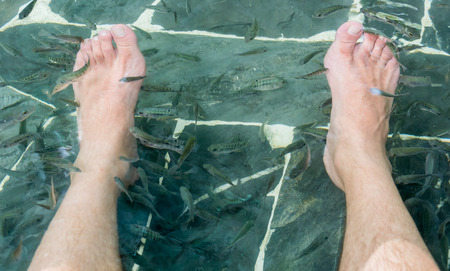nibble: Fish spa pedicure wellness skin care treatment with the fish rufa garra, also called doctor fish, nibble fish and kangal fish, Thailand Stock Photo