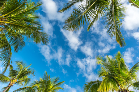 clouds sky: Natural background from Boracay island with coconut palms tree leafs, blue sky and clouds Travel Vacation