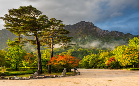myst: famous pair pines in the morning light - symbol of Seoraksan National Park, South korea Stock Photo
