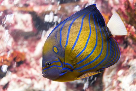tropical fish at Rayong aquarium, Thailand