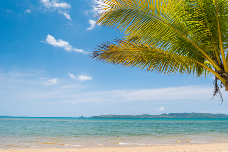 Tropical beach on the Busuanga island, Palawan, Philippines. Beautiful tropical island with sand beach and palms.  Travel concept