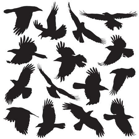 Crow Silhouette set 01 Illustration