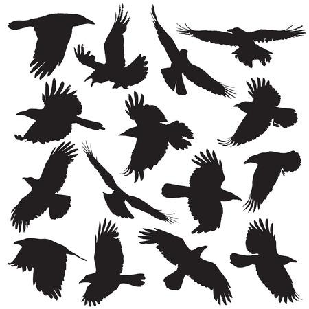cuervo: Silueta del cuervo set 01 Vectores
