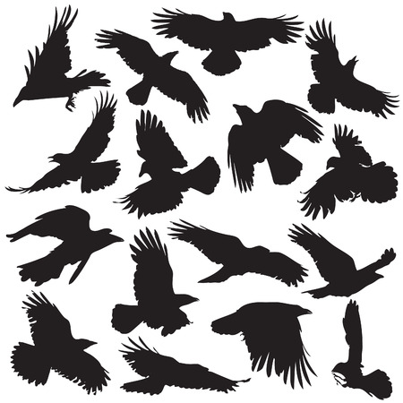 Crow Silhouette set 02 Stock Vector - 23377492