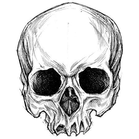 頭蓋骨の描画