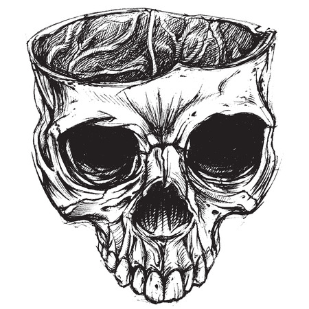Skull drawing 02 Vector