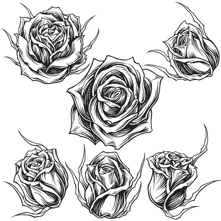 Roses vector set 01