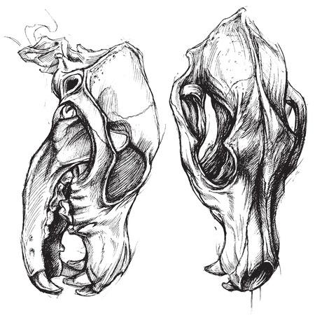 omen: Dog Skull