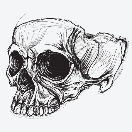ink pen: Skull Drawing