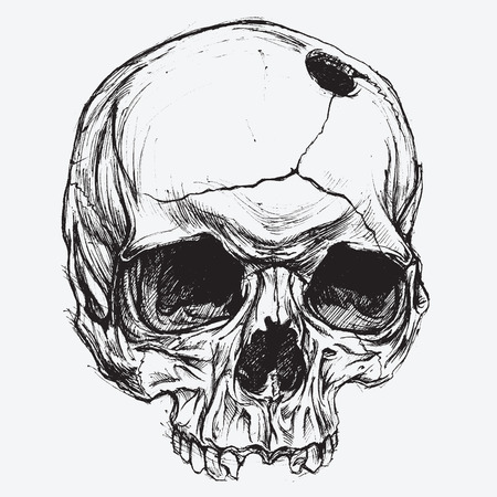 Skull vector Vector