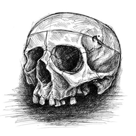 cross hatching: Skull