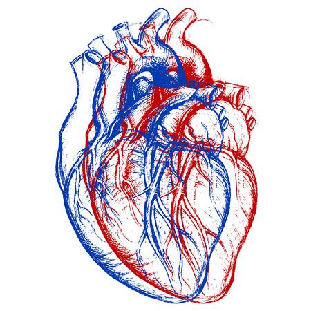 3D hart Stockfoto - 31386133