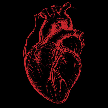 heart organ: Human Heart Drawing line work