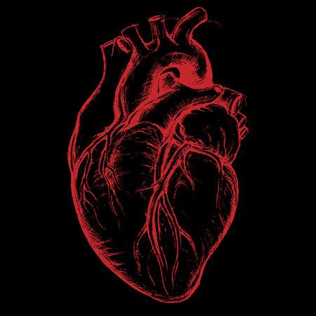 Human Heart Drawing line work