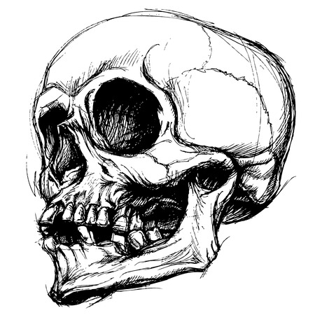 funeral: Skull Drawing line work vector