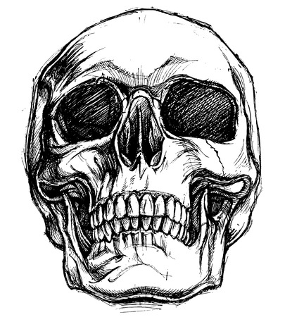 cross bone: Skull Drawing line work vector