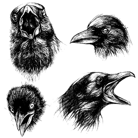 Crow head drawing line work vector set 01