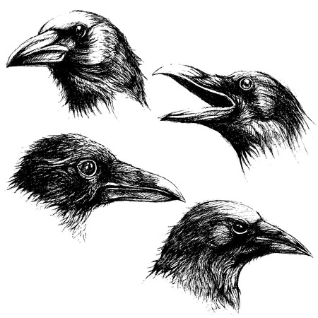 Crow head drawing line work vector set 02