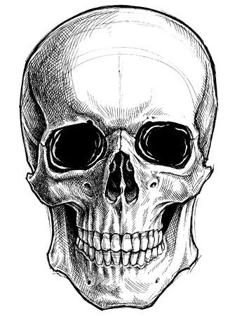 Dibujo del cráneo del vector línea de trabajo Foto de archivo - 70579207