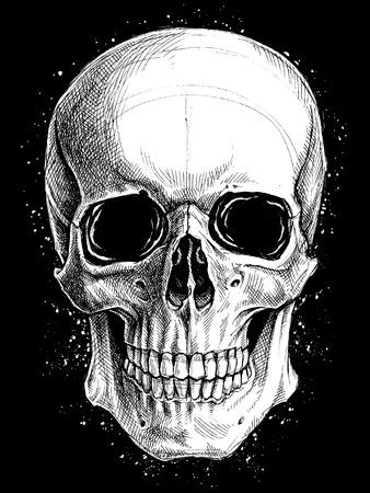 calavera: Dibujo del cráneo del vector línea de trabajo Vectores