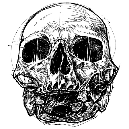 Skull Drawing line work vector for use. Иллюстрация