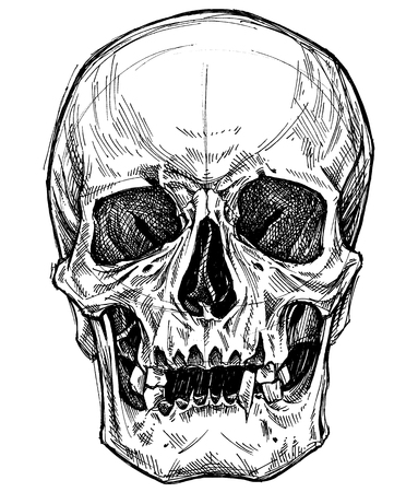 Skull Drawing line work vector for use. Illustration