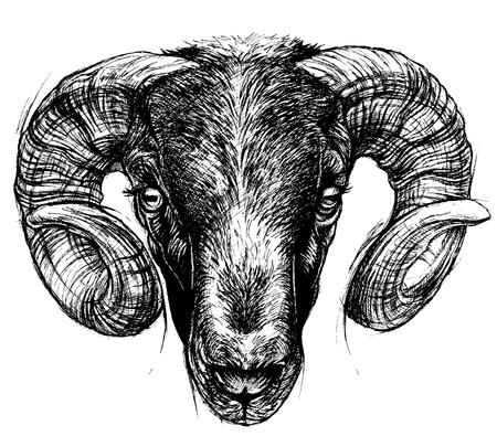 Ram 頭図面線画。